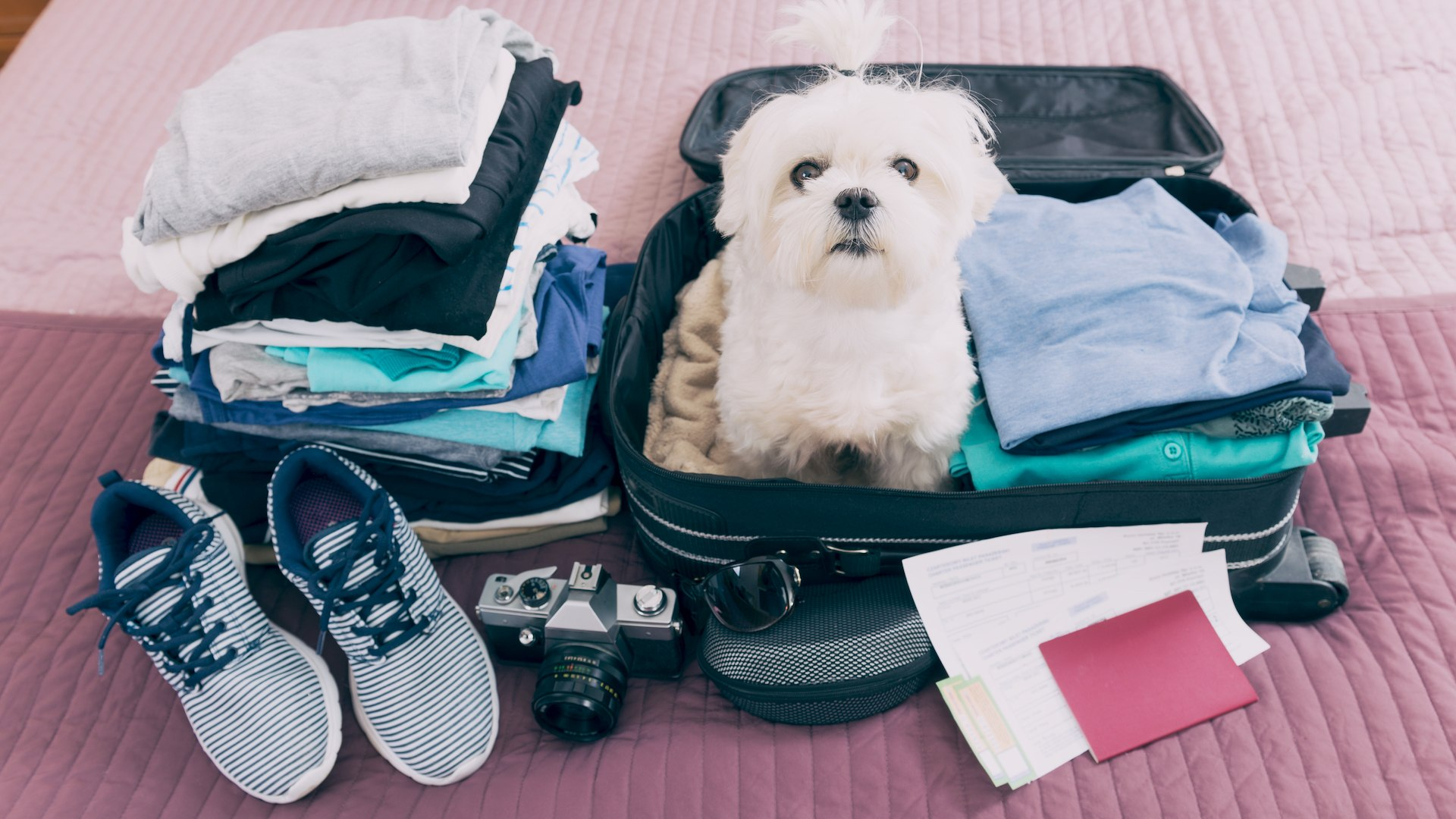 Sedating a pet for air travel