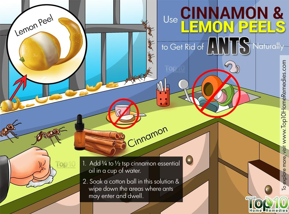 Home remedies for red ants